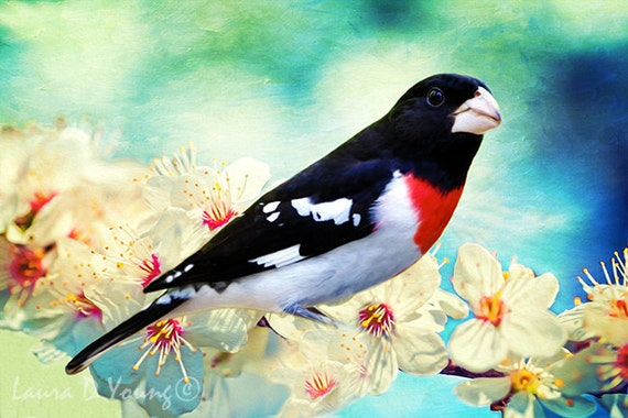 Grosbeak on Branch Art Print on Vintage Book Page Birds Home Office Decor Gifts