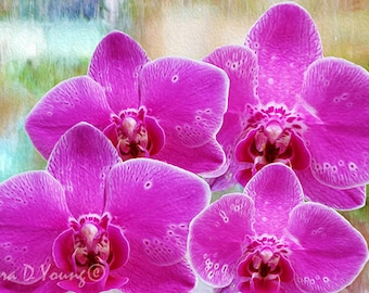 Four Pink Orchids, Orchid Art Print, Pink Flowers, Orchid Flower Petals, Mother's Day, Gift for Her, Home Wall Decor, Fine Art Photography