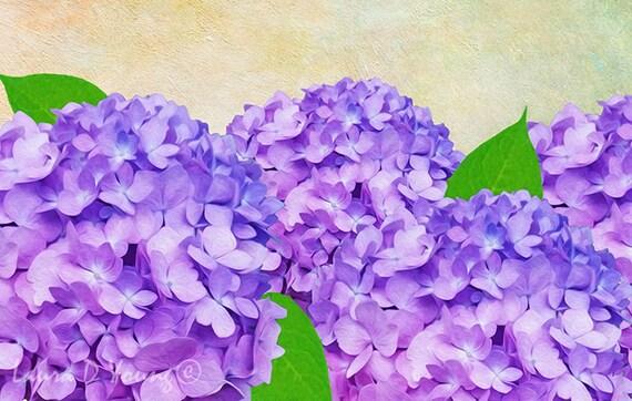 Purple Flowers Hydrangea Art Print Hydrangea Flower Petals Etsy