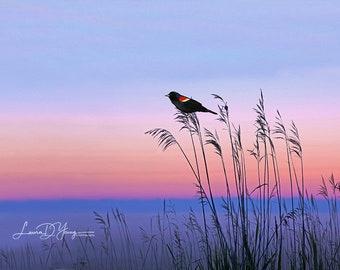 Red-winged Blackbird, Bird Wall Art, St Simons Island, Ocean Sunset, Bird Lovers, Gift Ideas, Original Art, Cottage Decor, Bird Photography