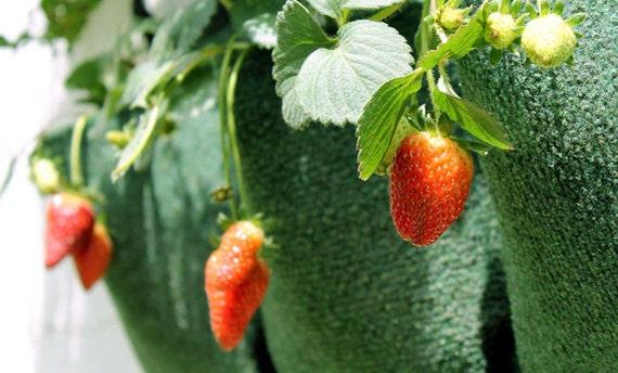 Verticale Tuin Zakken : Groene verticale tuin zak plantenbakken gemakkelijk muur etsy