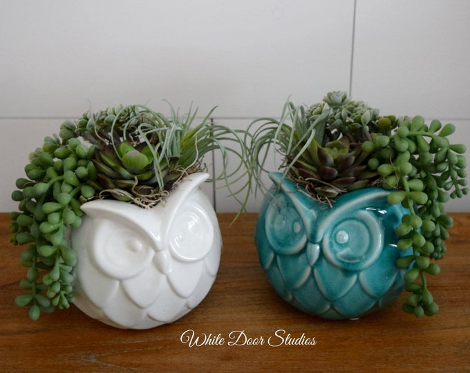 Faux Succulent Arrangement in Ceramic Owl Vase - Your Choice of Blue or White Vase - Desk Tabletop Decor