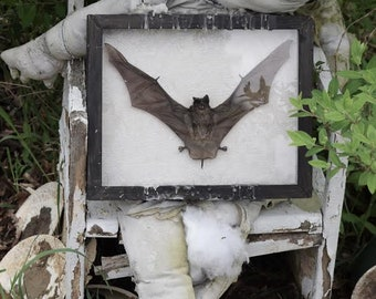 BAT SHADOW BOX