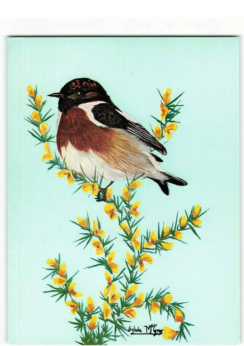 Young Stonechat by Sylvia MacGregor IC0 Vintage Bird Art Postcard