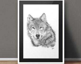 Lone Wolf Pencil Drawing Print