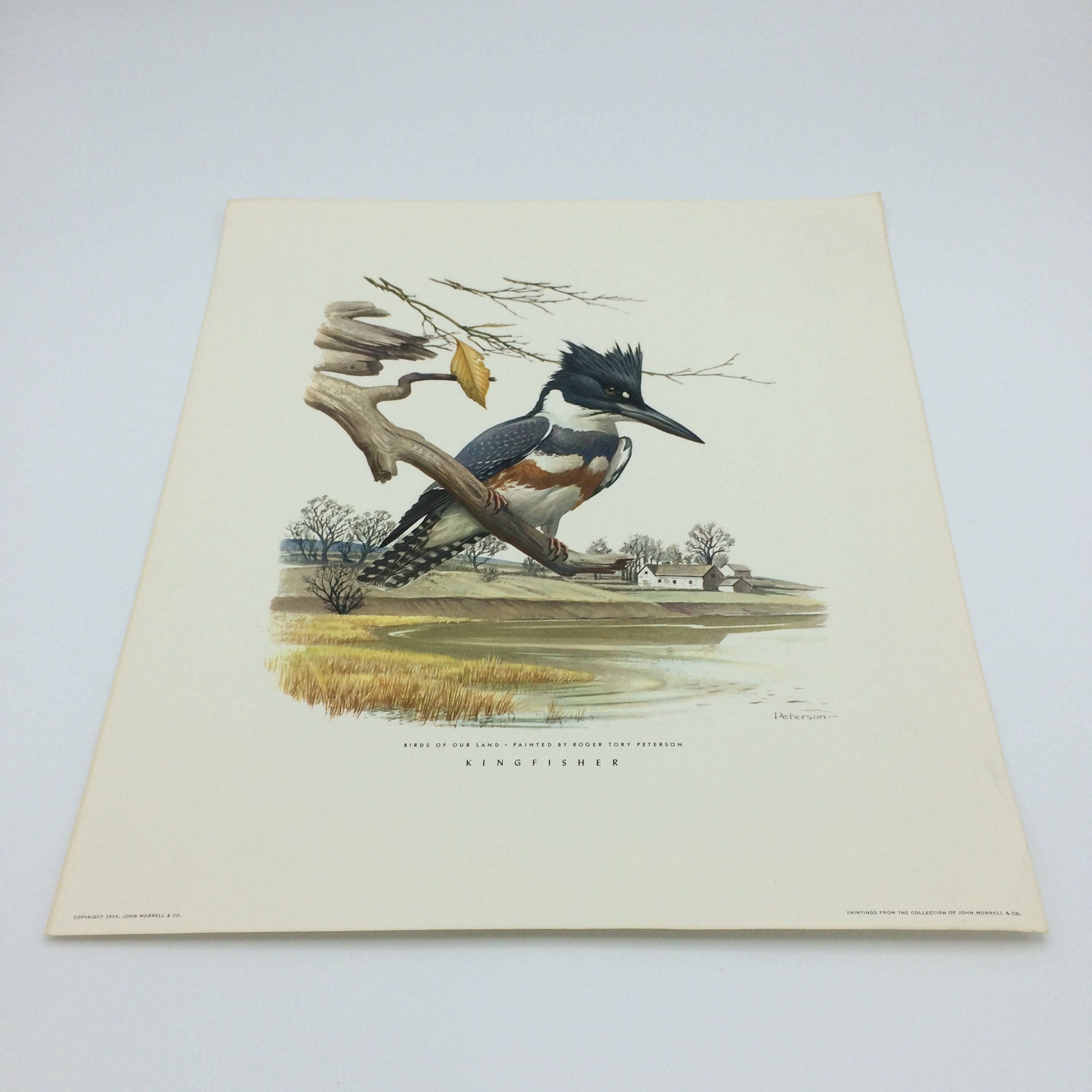 1954 Roger Tory Peterson Prints/John Morrell & Co/Kingfisher