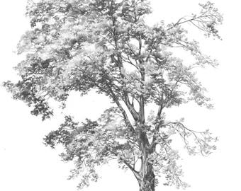 realistic tree sketch - single tree drawing - original pencil drawing of tree - tree wall art - black and white art - nature pencil drawing