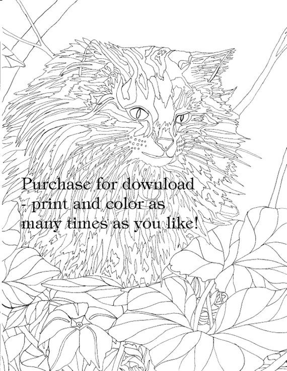 2 Coloring Pages A Cat And A Cuppa Downloadable Files