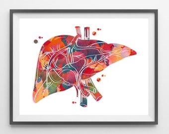 Medical art etsy human liver anatomy watercolor print medical art illustration surgery art medicine clinic wall decor anatomical liver anatomy art print malvernweather Image collections