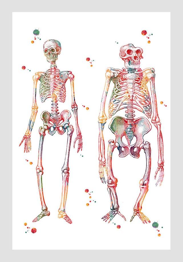Anatomie-Kunst-Mensch und Gorilla Skelett drucken Wissenschaft | Etsy