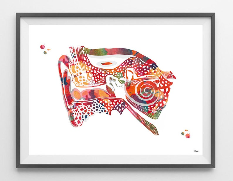 Ear Anatomy Watercolor Print Audiology Poster Cross Section Of Ear Showing Outer Inner And Middle Ear Structures Medical Art Wall Decor Gift