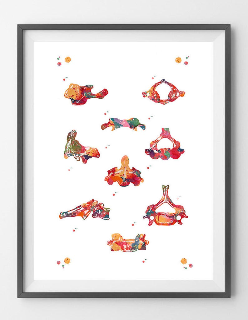Cervical Vertebrae Watercolor Print Anatomy Art Poster Atlas Etsy