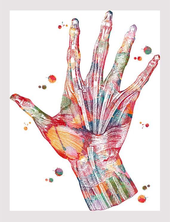 Hand Muskeln Anatomie Kunstdruck von Hand und Handgelenk | Etsy