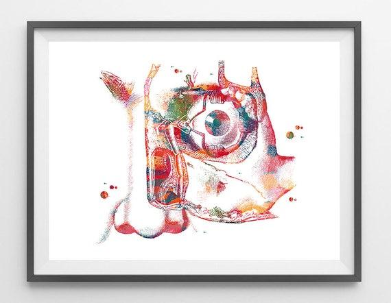 Tränen Vorrichtung Auge Anatomie Art Print menschliche Auge