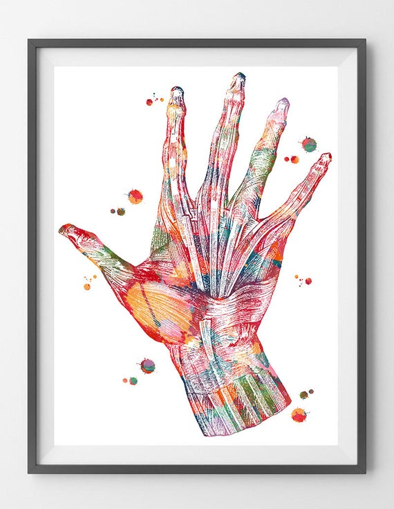 Hand Muscles Anatomy Art Print Hand And Wrist Muscles And Etsy