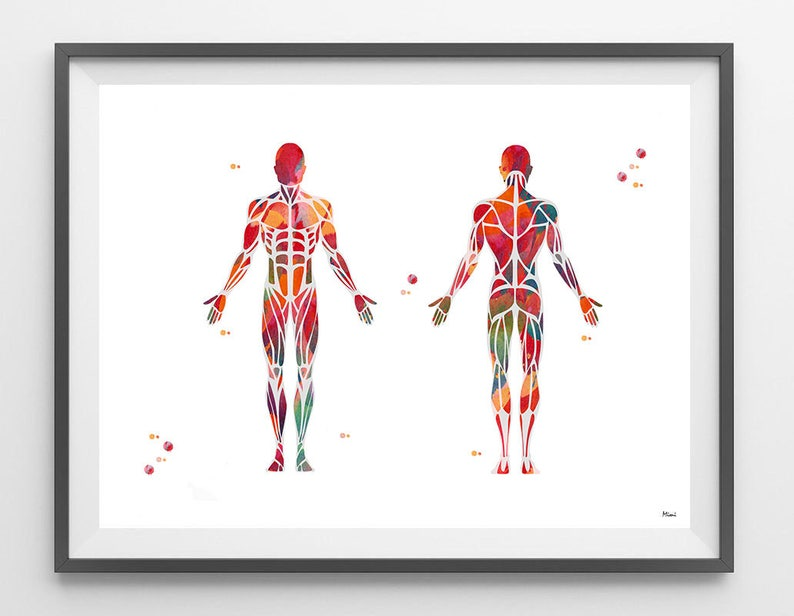Muscular System Watercolor Print Anatomy Art Human Muscles Etsy