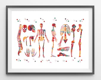 Human Body skeletal system watercolor print anatomy art medical art poster human skeleton structure print skeleton and bones illustration