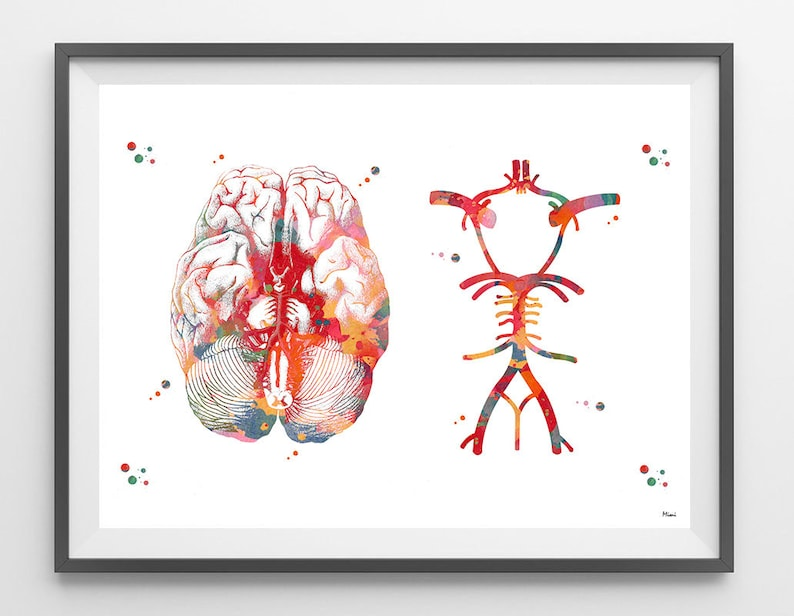Circle Of Willis Watercolor Print Anatomy Art Brain Anatomy Etsy