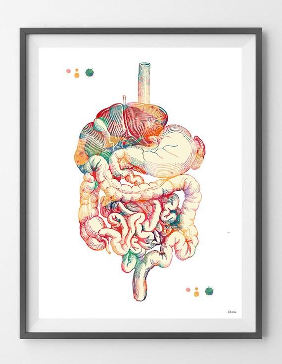 Verdauungstrakt Aquarell Druck menschlichen Anatomie | Etsy