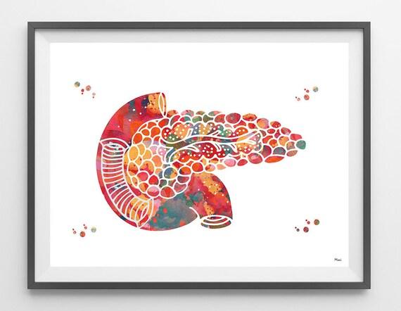 Pancreas Watercolor Print Human Anatomy Internal Organs Etsy