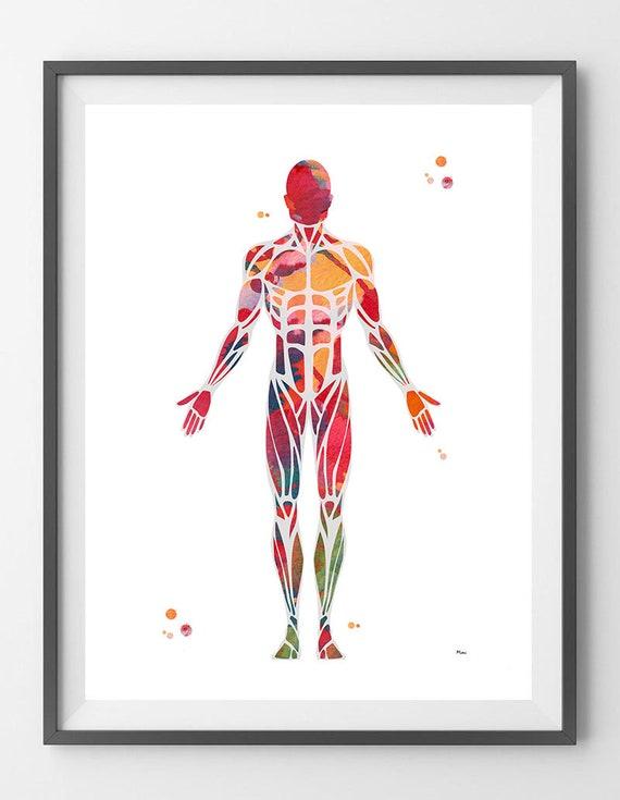 Muskuläre System Aquarell Druck Anatomie menschlichen Muskeln | Etsy