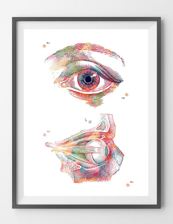 Framed Print The Human Eye with Deep Blue Pupil Picture Poster Medical Art