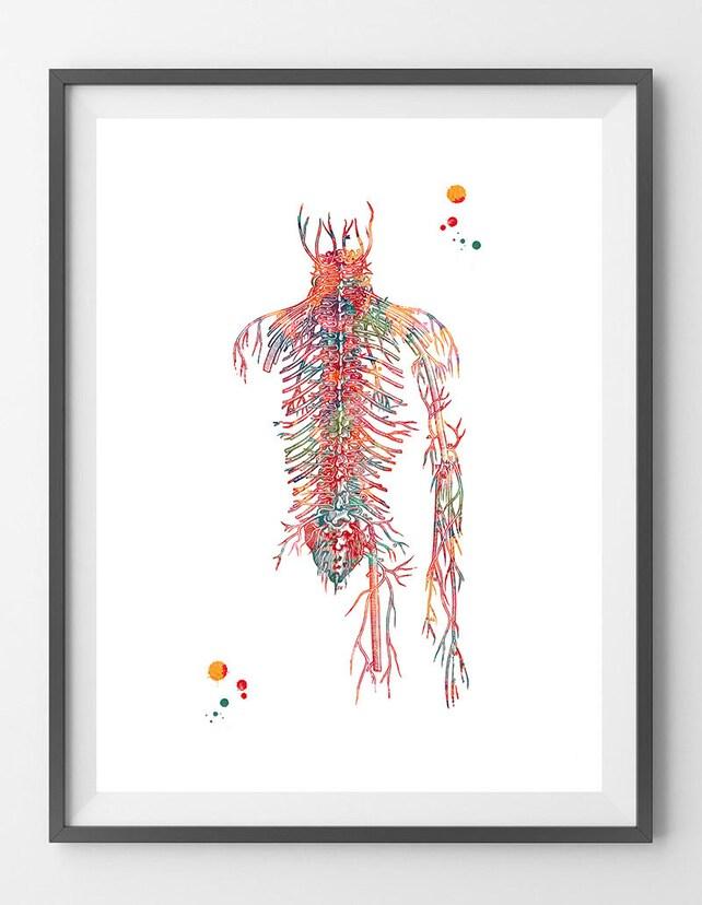 Herz-Kreislauf-System Aquarell Druck menschlichen Adern | Etsy