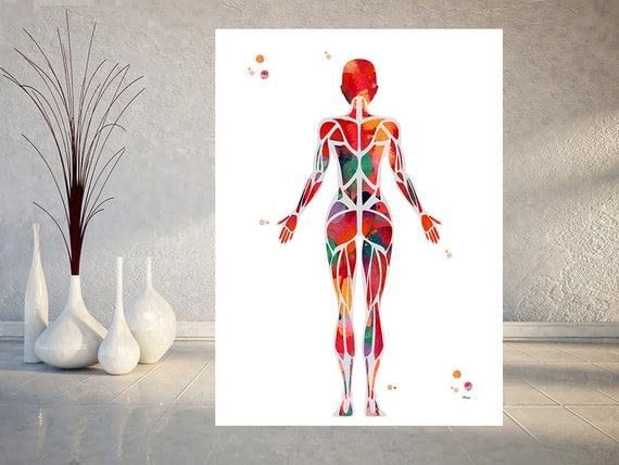 Weibliche Muskulatur Aquarell Druck Anatomie Art weibliche | Etsy