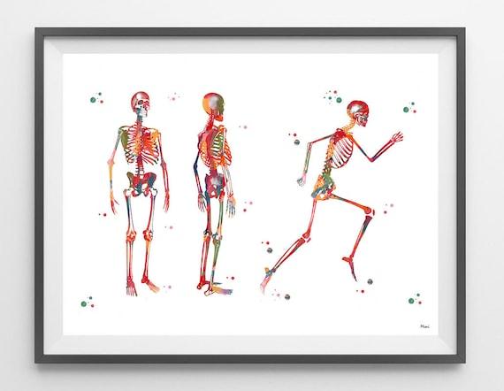 Menschlichen Körper Skelett Aquarell Druck Anatomie Heilkunst | Etsy
