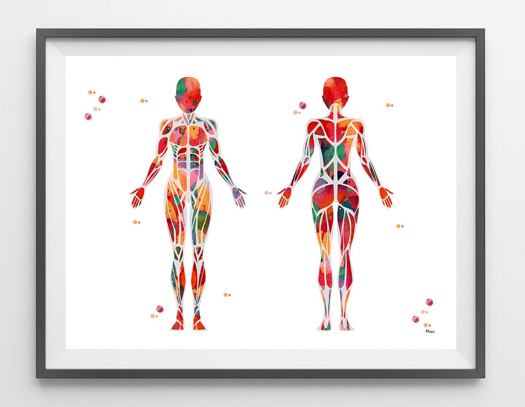 Female Muscular System Watercolor Print Anatomy Art Female Etsy