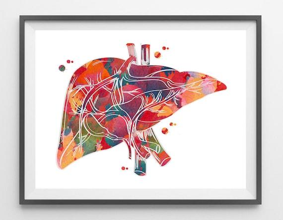 Menschlichen Leber Anatomie Aquarell Druck medizinische Kunst | Etsy
