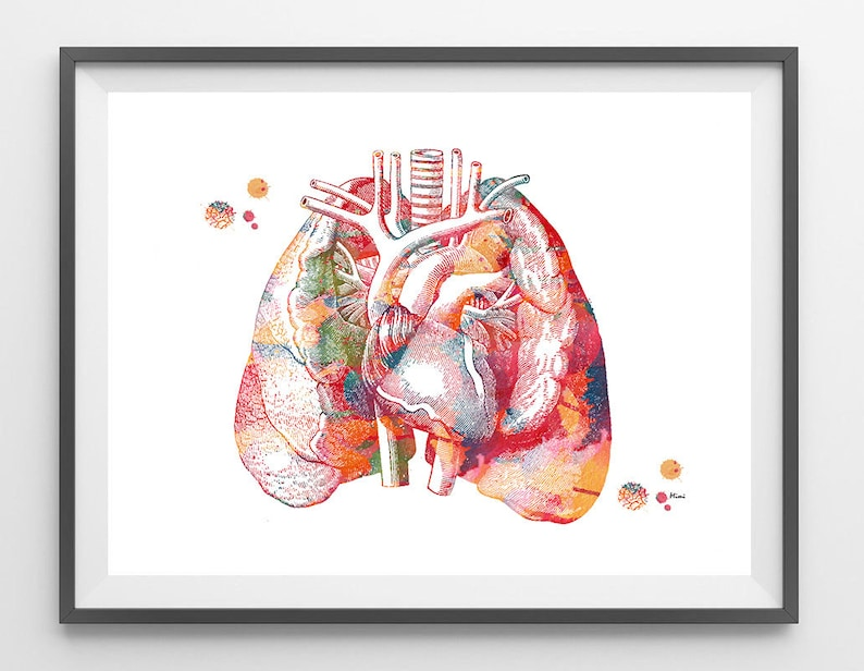 Lungs And Heart Anatomy Art Print The Heart In The Middle Of Etsy