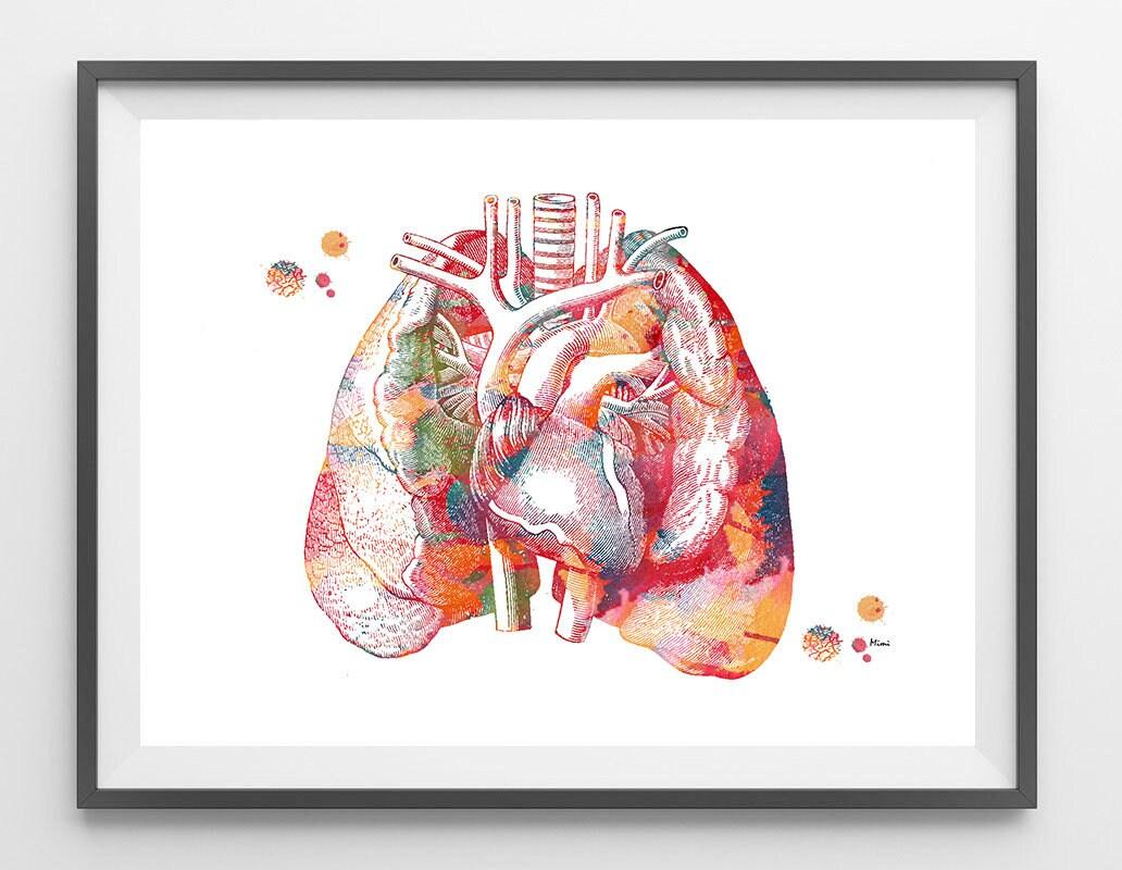 Erfreut Lunge Herzanatomie Bilder - Anatomie Ideen - finotti.info