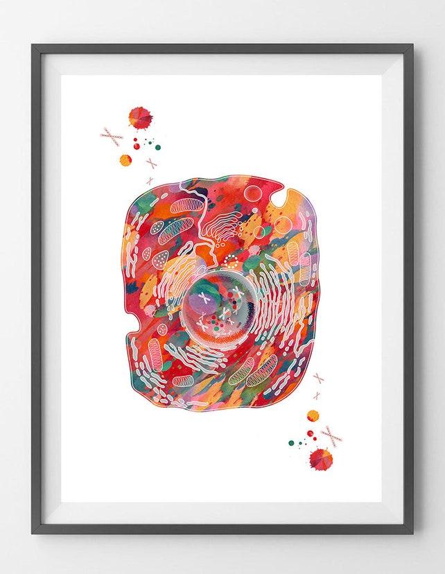Eukaryotische Zelle Art Print menschlichen Zelle Struktur | Etsy