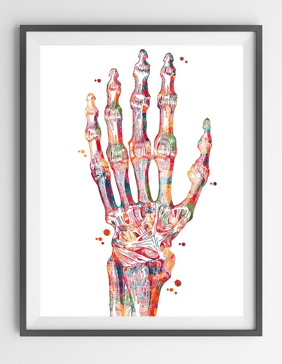 Hand Bones Anatomy Art Print Radiocarpal Joint Poster Wrist Etsy