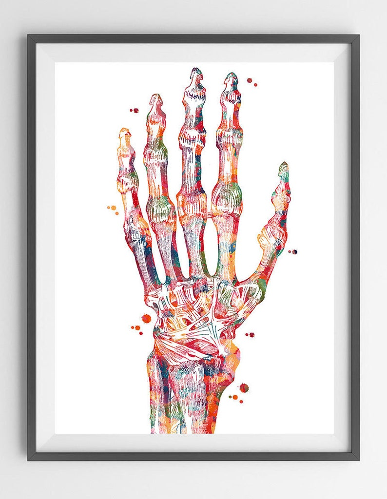 Hand Bones Anatomy Art Print Radiocarpal Joint Poster Wrist  a07bf6b7a88