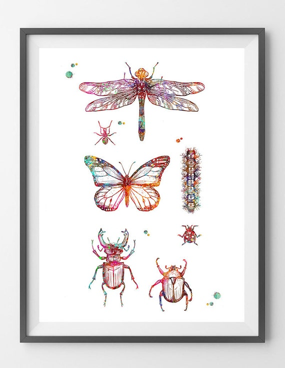 Insekten Sammlung Aquarell Druck Insekten Plakat Libelle