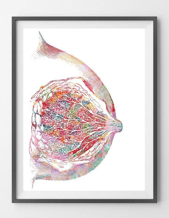 Brust Anatomie Kunstdruck Brustdrüse Poster weiblichen