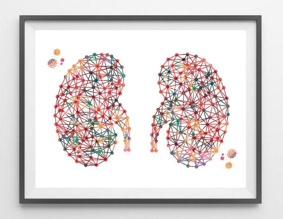 Nieren Kunst abstrakte Niere Anatomie Art Print Art Aquarell   Etsy