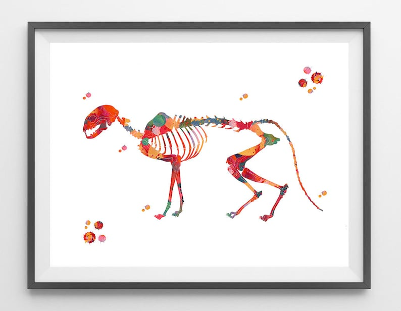 Cat Skeletal System Watercolor Print Veterinary Art Cat Etsy