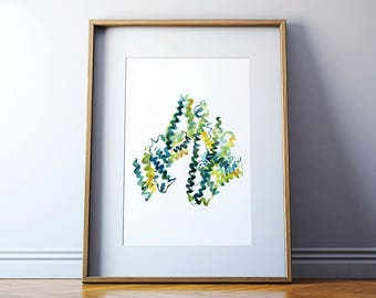 Albumin Protein Watercolor Art Print - Microbiology Art - Biology and Science Painting