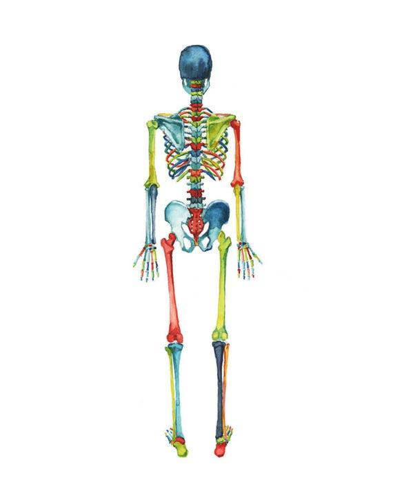 Körper-Systeme 3-Piece Aquarell Druck Set Anatomie Kunst   Etsy