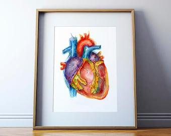 Vibrant Anatomical Heart Watercolor Art Print - Anatomy Art - Heart Painting - Cardiovascular Art