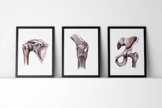 Schulter Knie Hüftgelenk Anatomie Aquarell Drucke Set von 3   Etsy