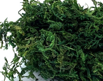 Fairy Gardens Natural Freeze Dried Loose Moss