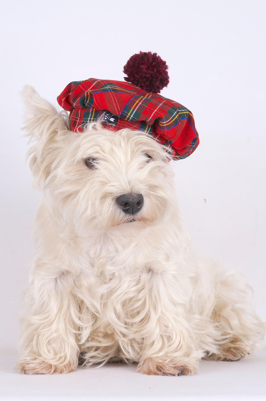 Tweed Hund Mütze Tweed Hund Mütze schottische Karomuster