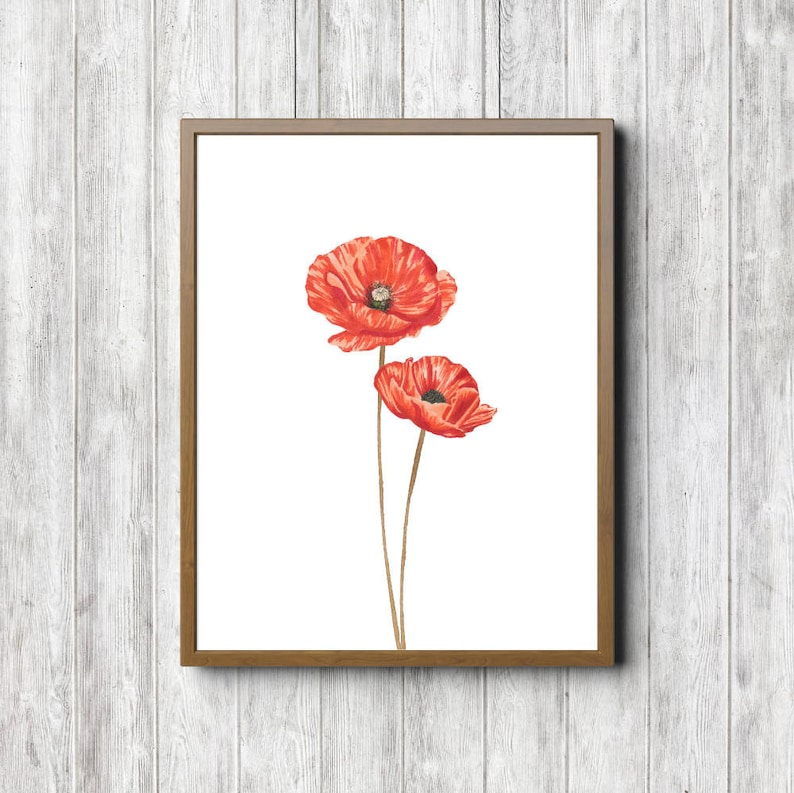 photo regarding Poppies Printable identify Watercolor Poppies Printable Wall Artwork - Flower Poster - Place of work Wall Artwork - Easy Flower Artwork Extensive Stem - 11 x 14 - 5 x 7 - 8 x 10
