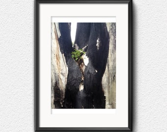 Photo Print, Ray of Hope - Close up Regrowth, New life after fire, Spring back to life