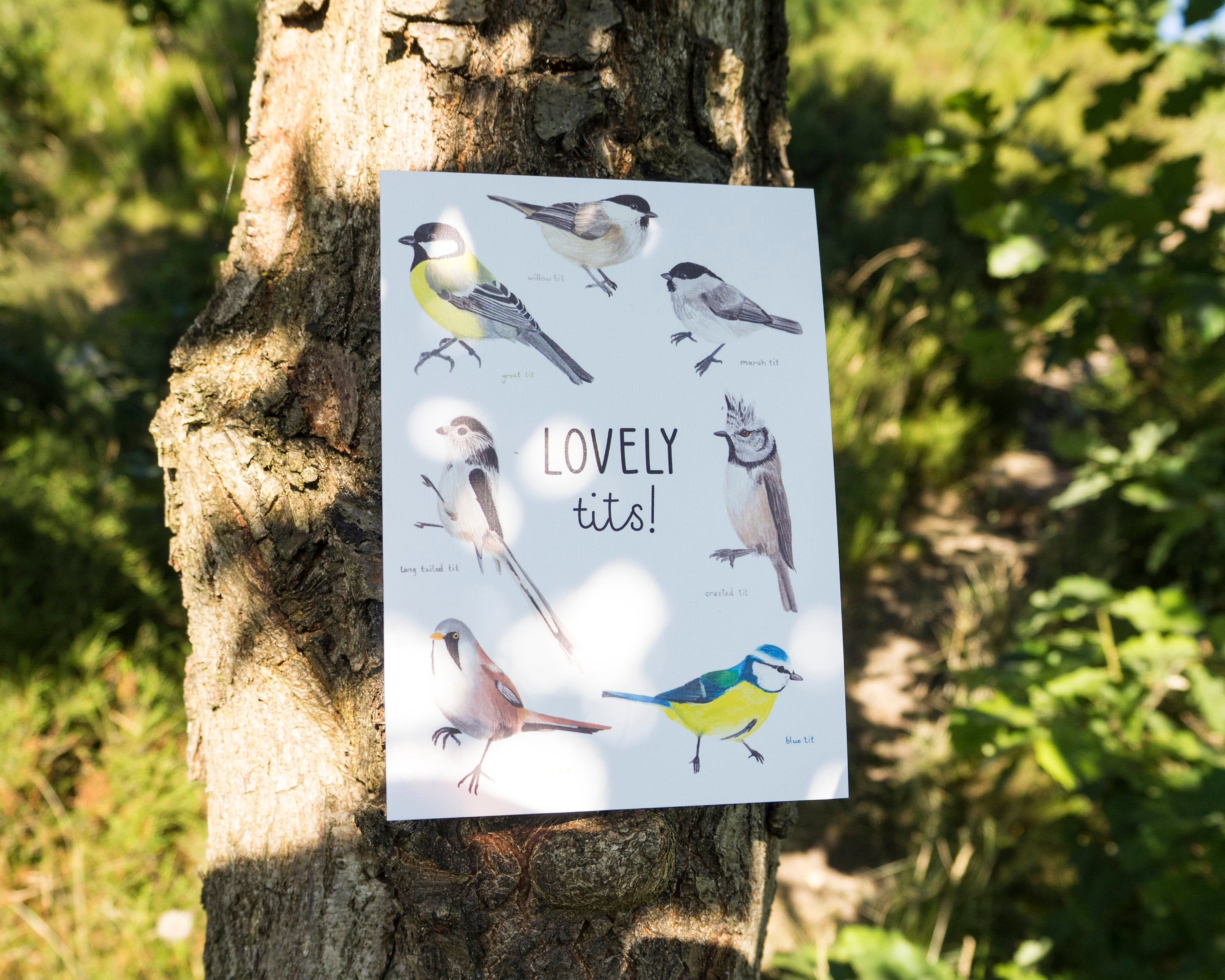 Lovely Tits Greetings Card Funny Love Card Funny Bird Etsy