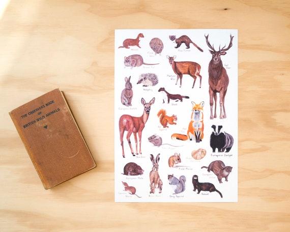 British Mammals A4 or A3 Print // Painting Art Print of British Animals